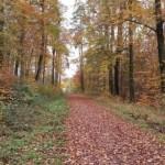 Von Waldenbuch nach Rohr 12.11.2016